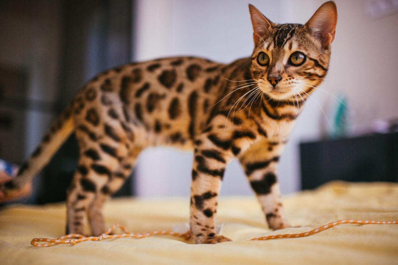 pensione per gatti a Genova Gatto Hotel