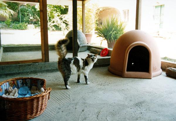 pensione per gatti a genova